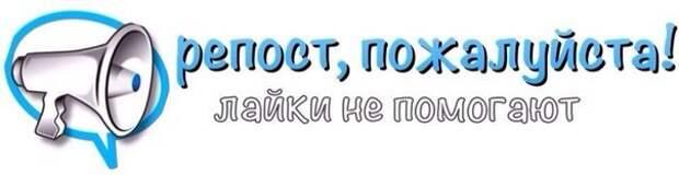 Шиншилловая красавица ищет самых любящих хозяев)))