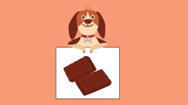 Собака и шоколад