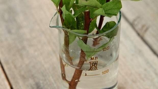 Недорогое аптечное средство с полезными свойствами для домашних растений