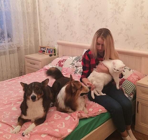 Эта собака почти стала домашней, но случай изменил ее судьбу дворняга, история, приют, собака