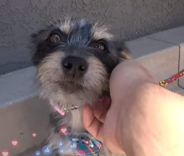 Волонтер нашла собаку, а спустя время увидела похожего на нее внешне еще одного пса