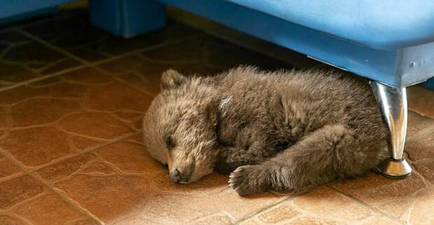 Белорусский фермер спас от голода и приютил медвежонка