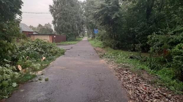 Рухнувшее из-за шторма дерево на Сестрорецкой уже убрали — управа