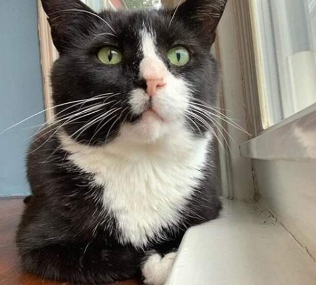 Кот Рафи: все боялись его болезни, хотя кошачий СПИД не опасен для людей