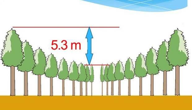 Конец 50-летнего эксперимента: В Японии появились ″круги на полях″ деревья, круги, лес, эксперимент, япония