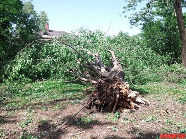 Как выкорчевать дерево без усилий