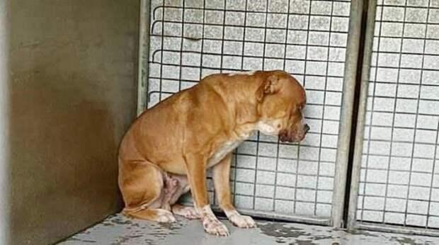 «Ты нам больше не нужен!»: хозяева бросили пса, и убитый горем питомец застыл, устремив взгляд в стену