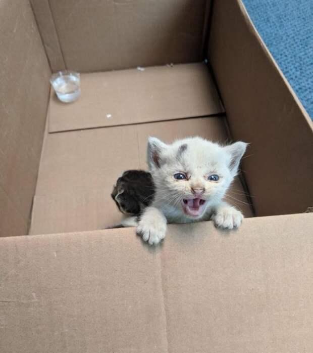 двое котят в коробке