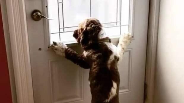"""""""Обними меня, если уходишь!"""" – думает пёс, сидя у дверей. """"Правилам"""" питомца все подчиняются"""