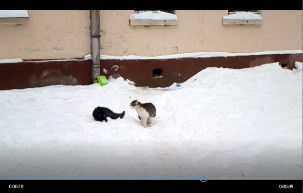 Коты в Золоторожском проезде почуяли приближение весны