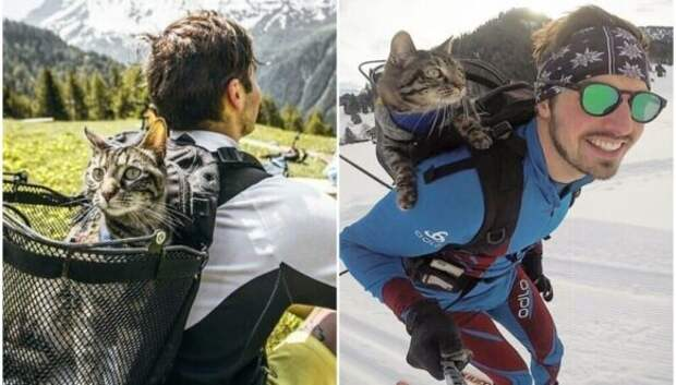 Лыжи, серфинг, парашют: кошка из Инстаграм живет в сто раз интереснее вас