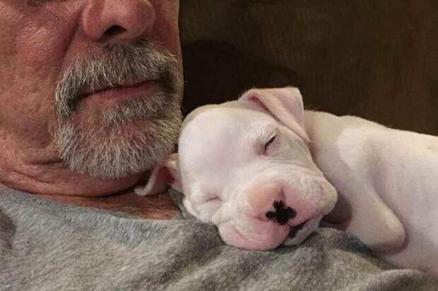 Пёс без передних лап получил шанс на жизнь благодаря хозяйке