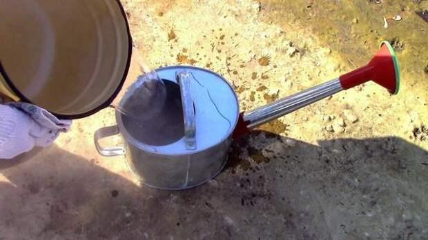 Наливаем горячую воду для обработки смородины