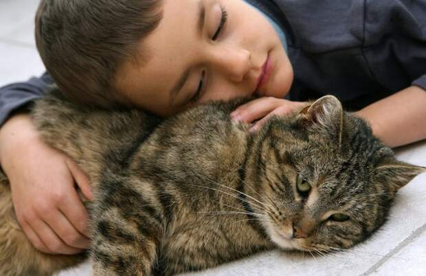 Фелинотерапия: лечение кошками животные, коты, факты