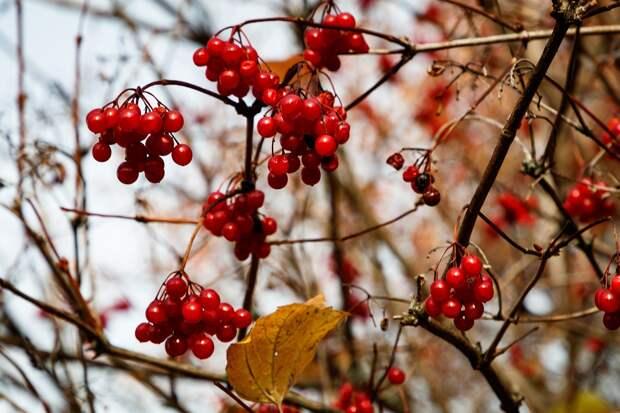 Народные приметы 28 октября: что нельзя и что можно делать в день Ефимия Осеннего