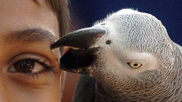 Попугаи посрамили Дарвина