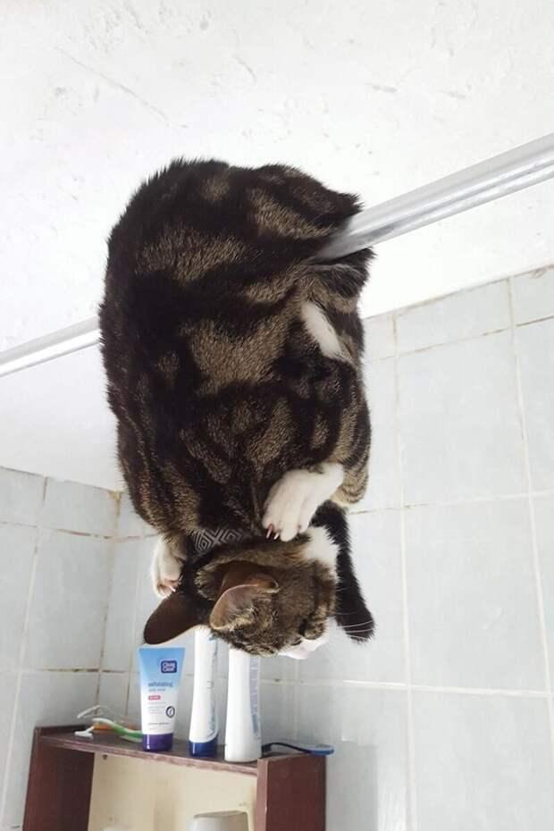 Когда в душе ты немножко летучая мышь. интересное, кошки, фотографии