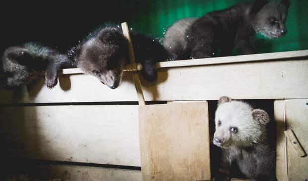 Шесть зоопарков в Карелии работают без лицензий