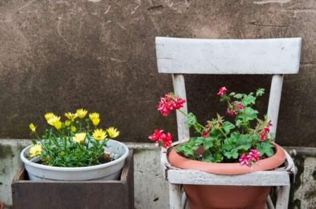 Классные способы устроить сад прямо у себя дома