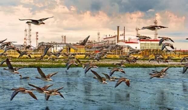 Нефтегазовая отрасль РФснизила воздействие наэкологию в2019 году