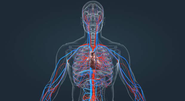 5 способов улучшения кровообращения
