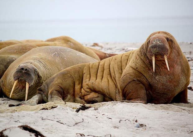 10 редких животных, которых еще можно встретить в России (ФОТО)