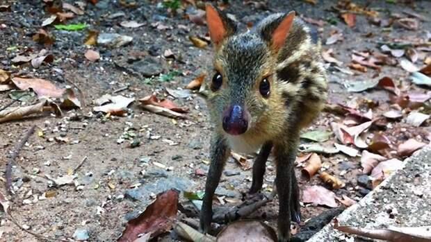 Животные, о которых знают немногие животные, виды, интересное
