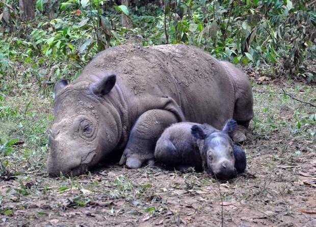 Экологи озвучили виды животных, которым грозит вымирание в ближайшем будущем
