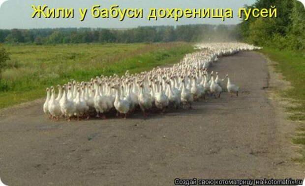 http://tomatoz.ru/uploads/posts/2011-03/1299701431_kotomatricy_018_resize.jpg