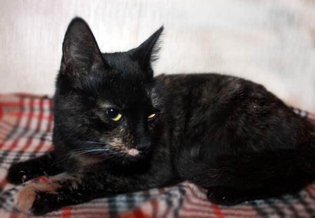 Что выброшенные кошки обычно делают на улице? Умирают, одни быстрее, другие медленнее. А мир, который их выбросил, продолжает жить.