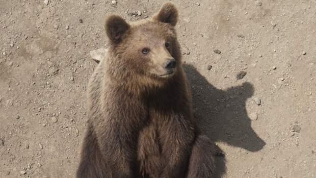 Центр спасения медведей в Тверской области принял еще трех питомцев