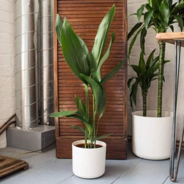 8 растений, которые можно оставить без полива на месяц