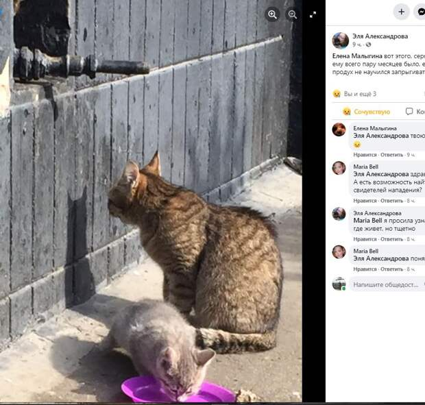 На Абрамцевской улице собака хаски загрызла котёнка