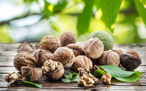 Суд постановил: орехи могут падать на машины с деревьев