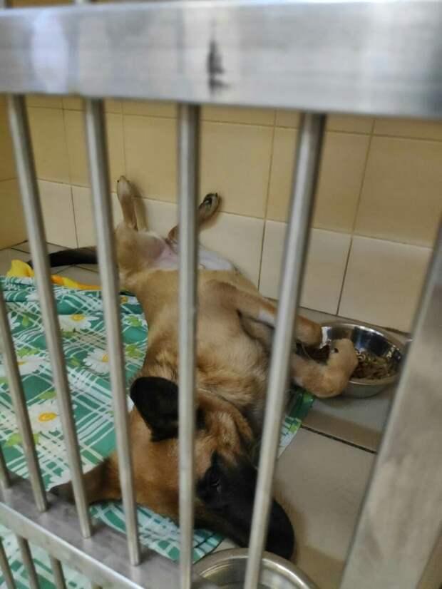 Собака, которую хозяин выбросил с 4-го этажа обрела новый дом и любящую семью