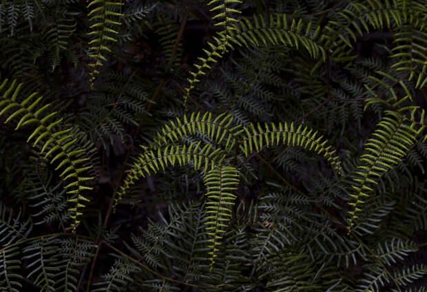 fotografii s zelenym tsvetom 10