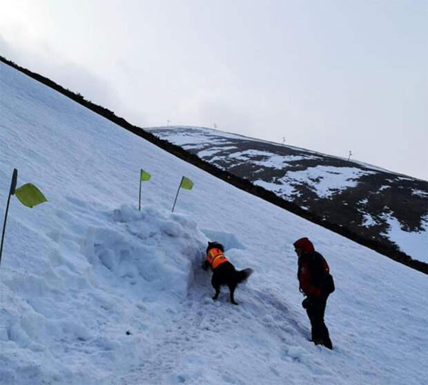 Чтобы проверить, как собака-спасатель будет его спасать, инструктор закопался в снег
