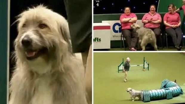 Эта собака на курсах дрессировки делает всё что ей в голову взбредёт