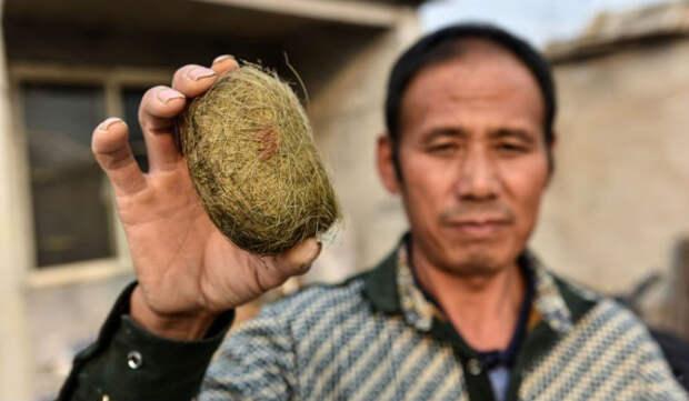 Китайский фермер обнаружил вжелчном пузыре свиньи настоящее сокровище