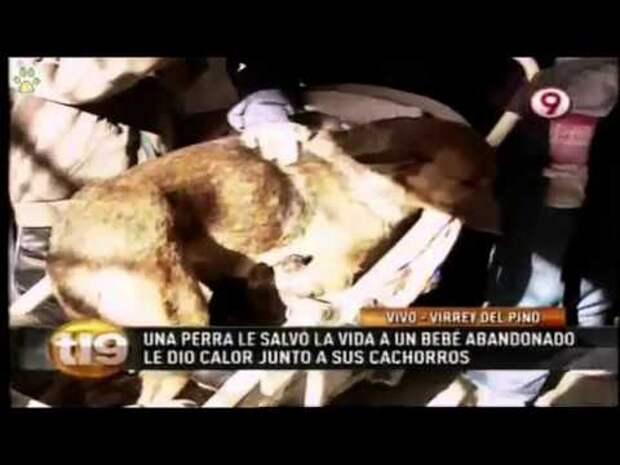 Жестокая мать выбросила младенца на улицу, но бездомная собака спасла его жизнь