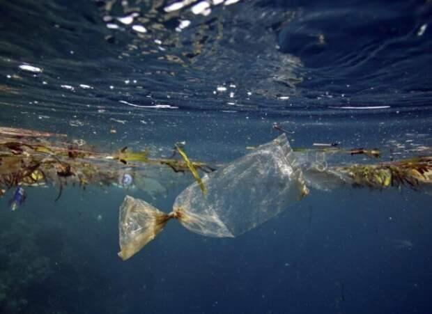 Кто может очистить моря и океаны от пластикового мусора? (5 фото)