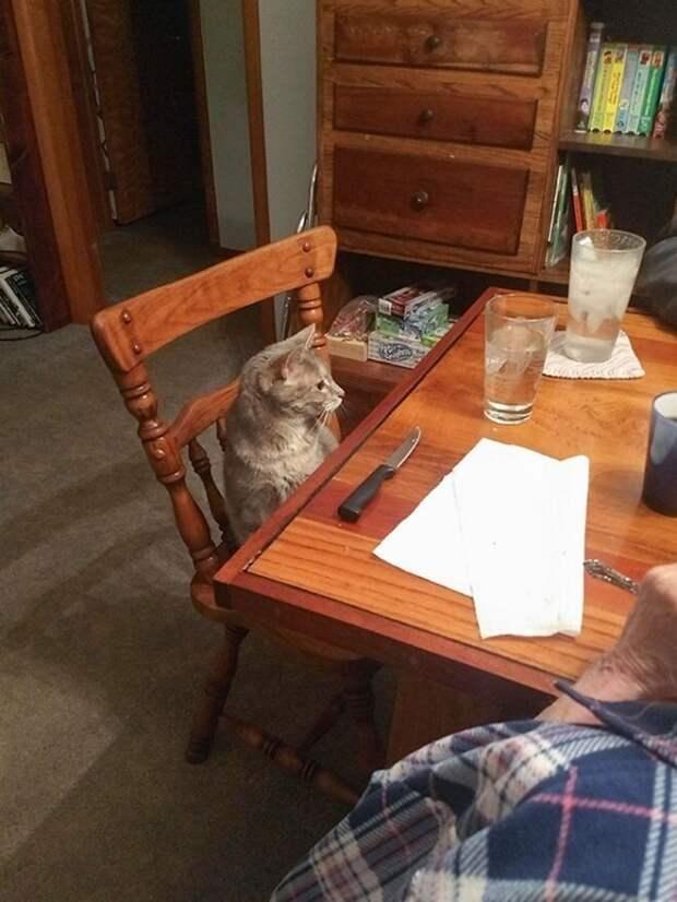 Избалованные кошки
