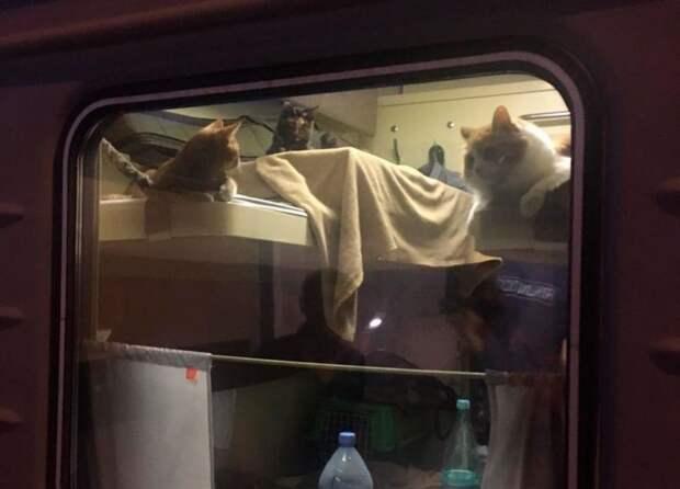 Пассажир поезда Москва – Анапа выкупил целое купе для своих котиков