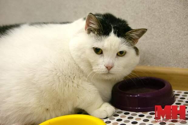 Кот по кличке Перышко весит как 200-кг человек. Он самый толстый в Беларуси!