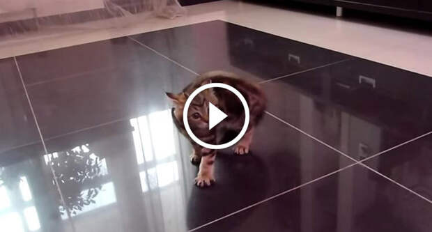 Устрашающий танец котёнка