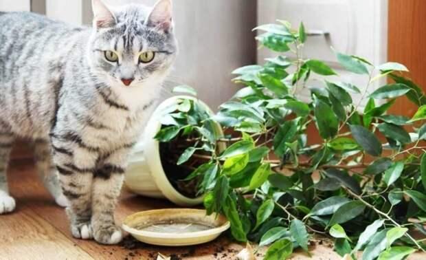 4. Коты и домашние цветы плохо совместимы Любовь, животные, котизм, котики, коты