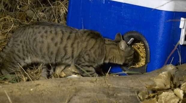Американец делает домики для бродячих котиков из выброшенных мини-холодильников