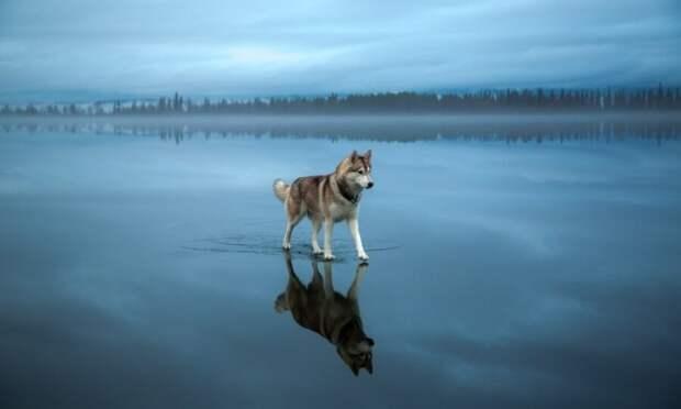 Собакен пафосный