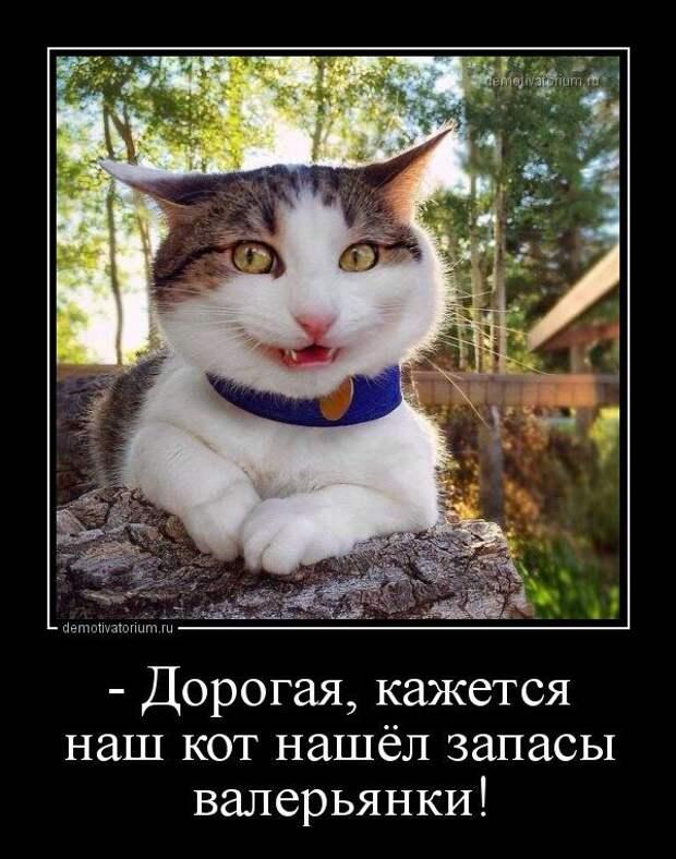 Новые демотиваторы-приколы (15 шт) | Товары для животных, Смешные ...