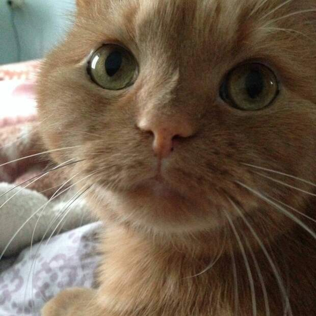 Бездомная кошка забеспокоилась, почувствовав, что девушка, которая её кормит, вскоре уедет